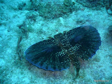 Animals Sea Animals Wild Life