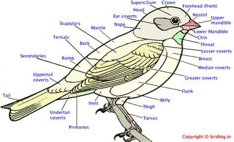 kingdom animalia class aves