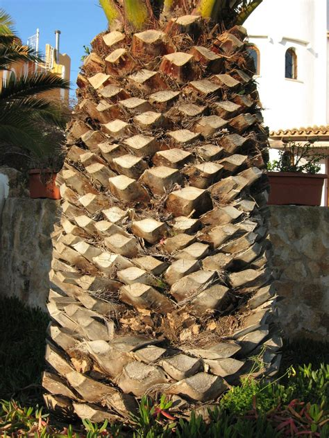 check template file tropical palm tree trunk jpg wikimedia commons