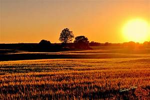 Free, Photo, Sunset, Over, Fields