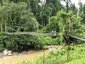 Adventure Holidays – 5 Rainforest Destinations to Choose ...