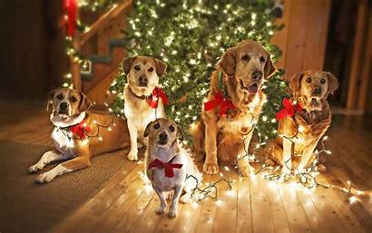 Christmas Animal Wallpapers Dogs Backgrounds Wallpaperaccess Trends
