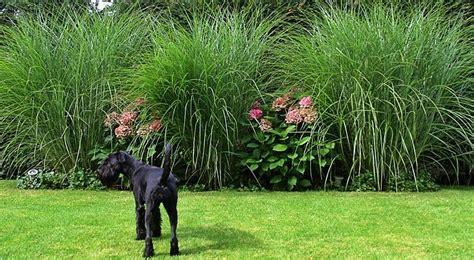 Gartengestaltung Gräser by Moderne Gartengestaltung Mit Gr 228 Sern Dfc41 Moetvoe