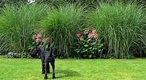 Gräser Im Garten Gestaltungsideen : gr ser und hortensien pinnwand ~ Eleganceandgraceweddings.com Haus und Dekorationen