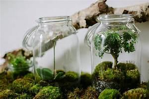 Terrarium Plante Deco : terrarium plante paris ~ Dode.kayakingforconservation.com Idées de Décoration