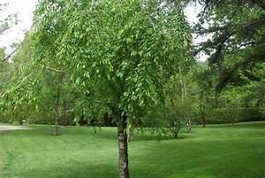 Les Plus Beaux Arbres Pour Le Jardin : jeunes arbres formation espace pour la vie ~ Premium-room.com Idées de Décoration