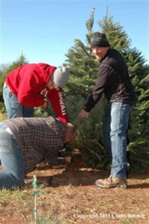 christmas tree farm somerset nj wolgast tree farm open for the holidays