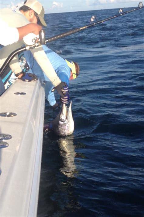 marlin fishing spotlight charter louisiana catch fresh