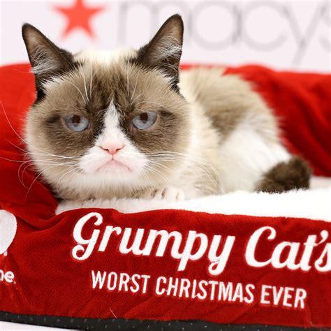 Grumpy Cat Movie  Popsugar Celebrity