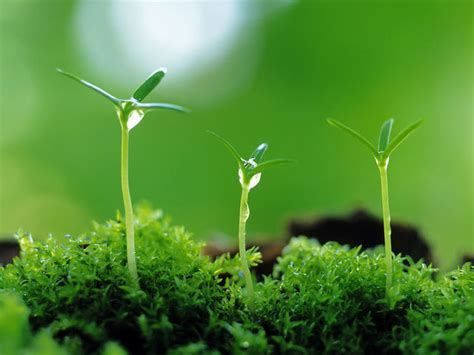what gives plants their green color how well do you science playbuzz