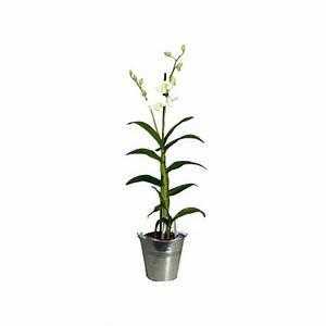 Cache Pot Orchidée : orchid e dendrobium blanc cache pot livraison express plantes et jardins ~ Teatrodelosmanantiales.com Idées de Décoration