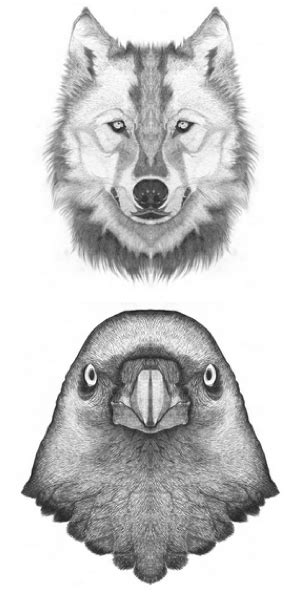 bird wolf drawing arty farty wolf tattoos symbolic