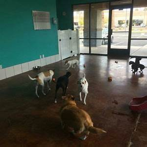 hot diggity dog daycare 44 photos 112 reviews pet With dog boarding las vegas