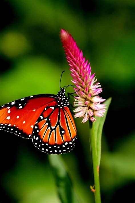 Download Wallpaper 800x1200 Butterfly Flower Plant