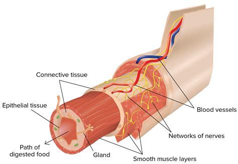 Organ In The Human Body