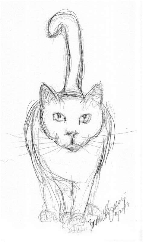 pencil sketch  cat daily cat sketches