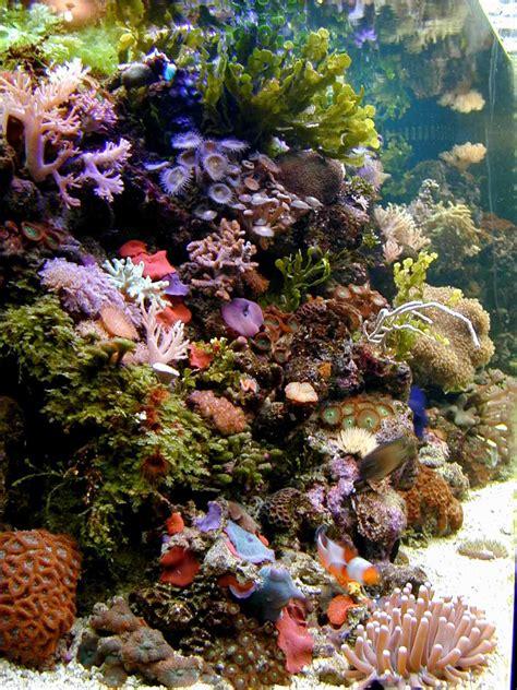 saltwater aquariums saltwater aquarium questions saltwater aquariums 2017 fish tank maintenance