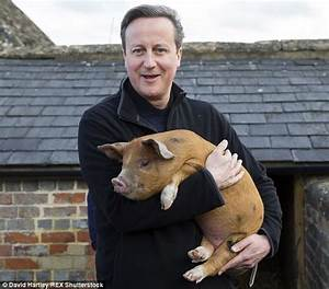 David Cameron's done stupid things but not with a pig's ...