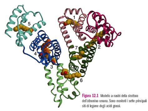 dispense biochimica emoglobina e mioglobina confronto dispense