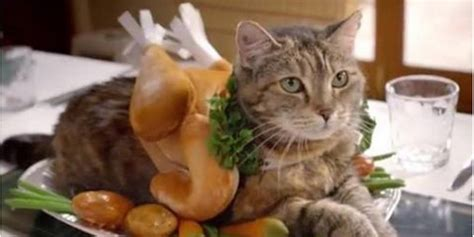 thanksgiving cat 7 cats dressed like thanksgiving turkeys the daily dot