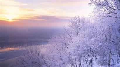 January Sceneries Scenery Snow Trees