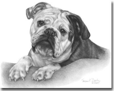 shading  art google search bulldog art english