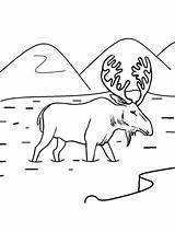 Moose Coloring Pages Printable Drawing Shinx Face Animal Drawings Template Cool2bkids Deer Realistic Printables Preschoolers Getcolorings Preschool Paintingvalley Gaddynippercrayons sketch template