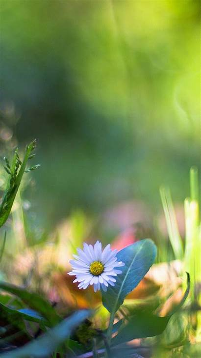 Flower Bokeh Nature Lawn Mm92 Iphone Papers