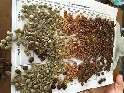 Coffee Roasting Roast Roasts Kopi Kenapa Antioxidant
