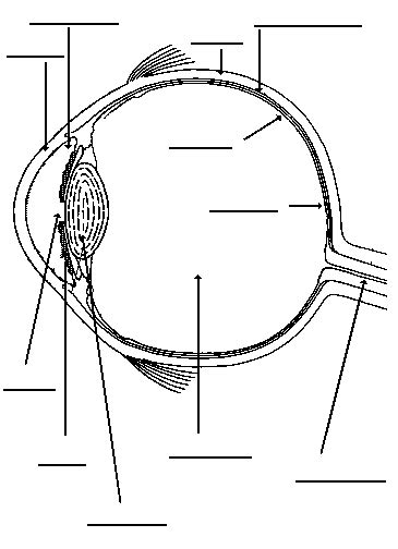 Eye Diagram To Label Kifd by Neuroscience For Fill In 3