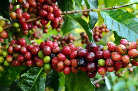 How Well Do You Know Caffeine? Death Wish Coffee Net Worth Origin Costa Zlote Tarasy Bulletproof Main Street Resep Warning Label Company Mug Uk