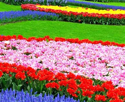 Types Of Gardens : Type Of Garden Flowers Different Type Of Garden Flowers