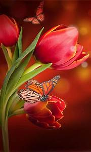 Free Flowers Wallpaper HD APK Download For Android GetJar