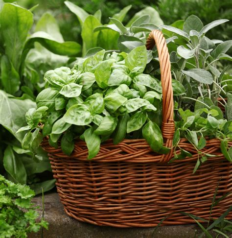 Kitchen Herb Garden Ideas - mother 39 s day gift ideas for your mother in law 29secrets