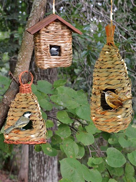 finch bird houses let s get it right birdcage design ideas