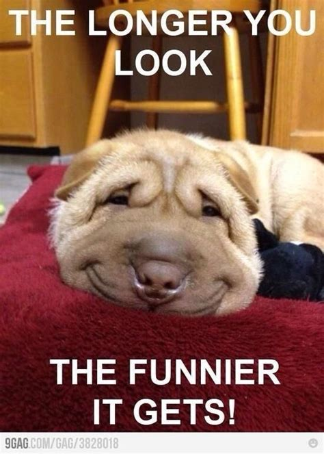 Memes And Funny Pictures - best 25 funny dog memes ideas on pinterest dog memes smiling dog meme and laughing dog meme