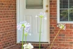 Schmucklilie überwintern Gelbe Blätter : schmucklilie berwintern was tun gegen gelbe bl tter ~ Eleganceandgraceweddings.com Haus und Dekorationen