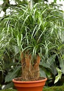 Plante Fleurie Intérieur : plante fleurie d 39 int rieur liste ooreka plante ~ Premium-room.com Idées de Décoration
