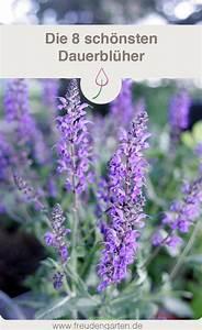 Lang Blühende Pflanzen : blumen die lange bl hen garten pinterest garten garten pflanzen und garten ideen ~ Eleganceandgraceweddings.com Haus und Dekorationen
