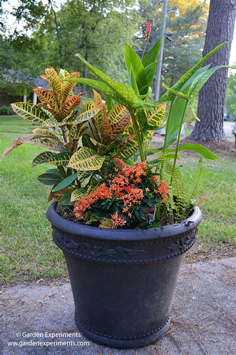 Container Garden For Amazing Fall Color