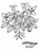 Coloring Moss Designlooter sketch template