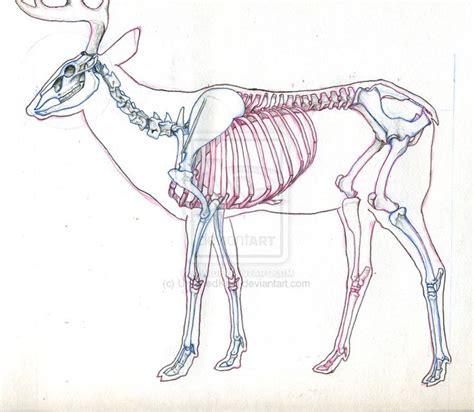 deer skeleton diagram google search animal poses