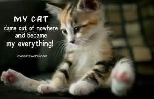 quotes about cats quotes about cats quotesgram