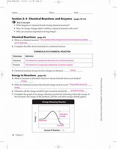 24 Chemical Reactions And Enzymes Worksheet Answers