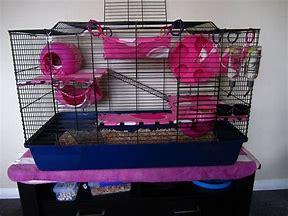 Hd Wallpapers Pet Rat Cage Ideas Wallpaper Desktopwhapddownload