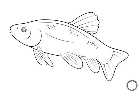 Coloring Gambar Ikan by Gambar Ikan Lele Untuk Diwarnai Coloringpages Asia