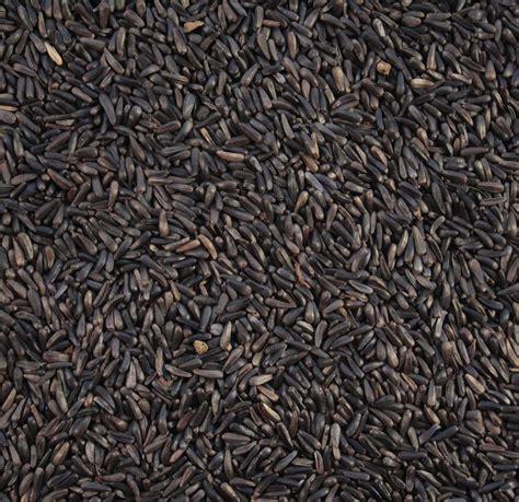 niger seed niger seeds british wild bird food and habitat suppliers