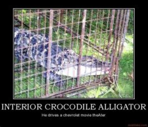 image  interior crocodile alligator