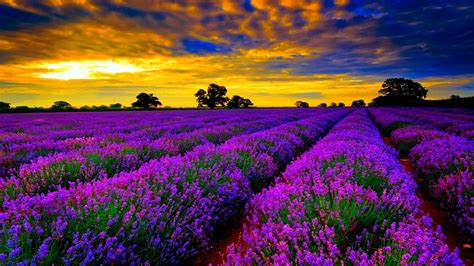 Wallpapers Photo by Flowers Hd Wallpaper Hd Images Quality