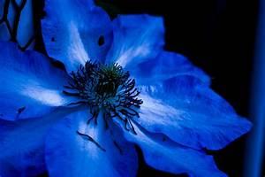 Blue flower 1 | Flickr - Photo Sharing!